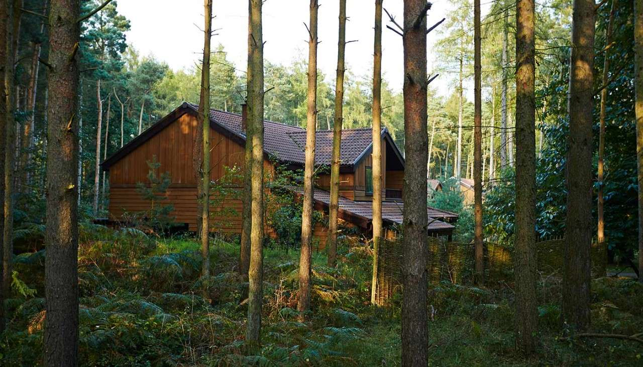 Lodges within the forest